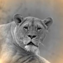 Nostalgie Löwin von kattobello