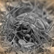 Nostalgie Griechische Landschildkröte by kattobello