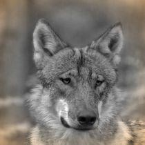 Nostalgie Wolf von kattobello