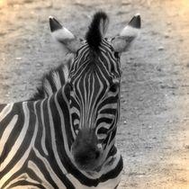 Nostalgie Zebra von kattobello