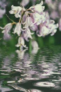 Frühlingswasser by Chris Berger