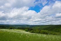 Frühlingswiese im Wispertaunus by Ronald Nickel