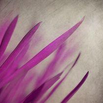 Pink Blades von Priska  Wettstein