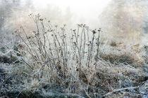 Winter Magic by Randi Grace Nilsberg