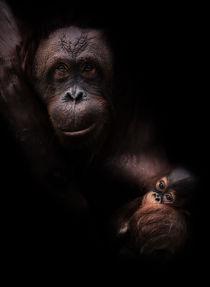 Orang - Utan mit Baby  by Stefan Mosert
