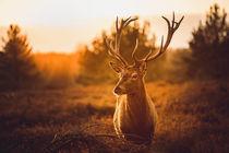 Wildlife von Volker Handke