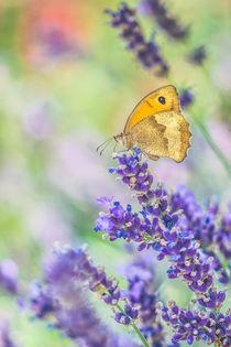 Lavendel von Sabine Fallend