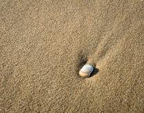meandering seashell