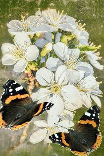 Frühlingsboten - Spring messengers by Chris Berger
