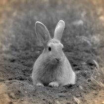 Nostalgie Kaninchen by kattobello