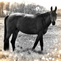 Nostalgie Pferd by kattobello