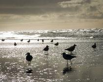 contrast-gulls by Erik Mugira