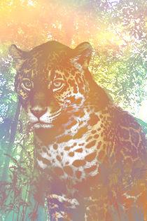 Jaguar by Pedro  Barros