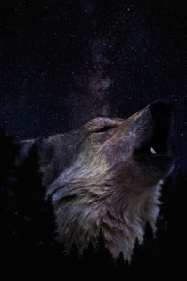 Wolf by Pedro  Barros