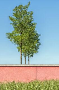 Red wall 325810 von Mario Fichtner