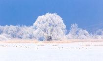 Winterlandschaft by maraynu