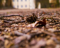 pinecone by Michael Naegele