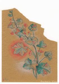 Plante 1 - 211216 von Anastassia Elias