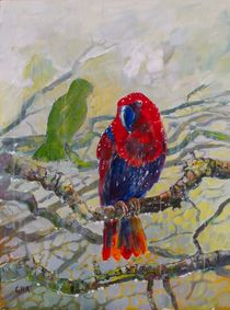 Eclectus parrot II by Geoff Amos
