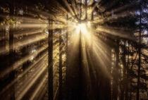 Das Leuchten im Wald von Simone Wunderlich