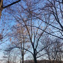 Bäume bei blauem Himmel  by Ivy Müller