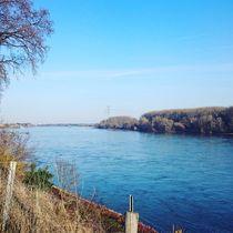 Der Rhein  by Ivy Müller
