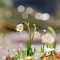 'Springtime' by Thomas Matzl