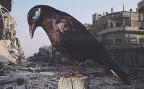 BIRD OF DEATH by Ivan de Faveri