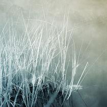 Am See 4 by Priska  Wettstein