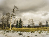 Naturschutzgebiet Irndorfer Hardt by Christine Horn