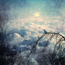 HEAVENLY BIRDS III by Pia Schneider