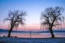 Winterabend auf der Insel Reichenau by Christine Horn