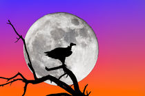 Vulture Silhouetted Against Supermoon by Graham Prentice