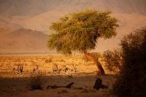 NAMIBIA ... when the sun goes down von meleah