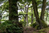 Der Wald als Wildnisgebiet by Ronald Nickel