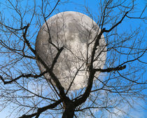 Evening moon by Michael Naegele
