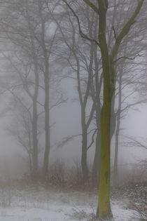 Winterwald 2 von Bernhard Kaiser