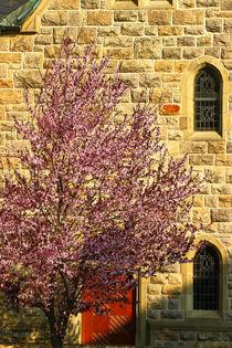 Die Kirsche vor der Kirche von Bernhard Kaiser