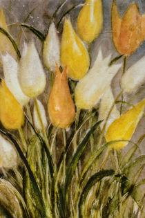 Yellow and white Tulips - Gelbe und weiße Tulpen von Chris Berger