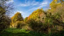 Ein grüner Weg im Herbst by Ronald Nickel