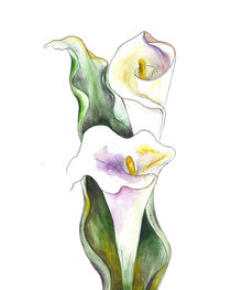 White Cala Lily by mikart