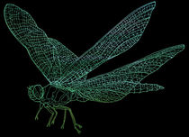 Dragonfly von David Bushell