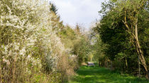Feldweg am blühenden Schlehdorn by Ronald Nickel