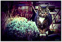 Siri Cat by Sandra Vollmann