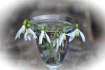 Schneeglöckchen im Glas by Claudia Evans