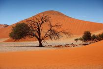 NAMIBIA ... Namib Desert Tree II by meleah