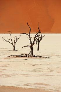 NAMIBIA ... Deadvlei II by meleah