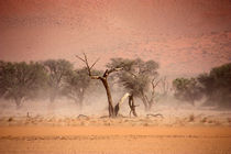 NAMIBIA ... through the storm I by meleah