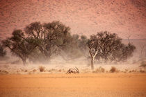 NAMIBIA ... through the storm II by meleah