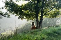 Ein Pferd auf der morgendlichen Weide von Ronald Nickel